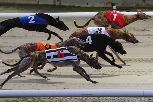 Greyhound Racing Betting 95277